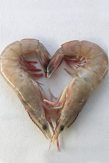 gal_shrimp_heart.jpg
